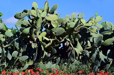 cactus-3425073_640